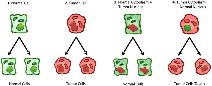 Cancer Metabolic INSULEAN